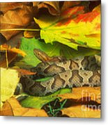 Northern Copperhead Camouflaged Metal Print
