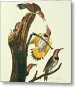 Northern Flicker Birds Metal Print