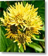 Northern Goldenrod On Alpine Tundra Trail By Eielson Visitor's Center In Denali Np-ak Metal Print
