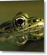 Northern Leopard Frog Metal Print