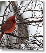 Northern Red Cardinal In Winter Metal Print