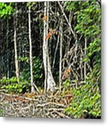 Northern Woods Metal Print
