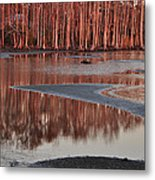 Northshore Cypress Metal Print