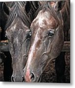 Nose To Nose Metal Print