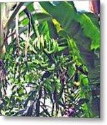 Nosy Komba Banana Palm Metal Print