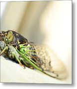 Not A Cute Bug Metal Print