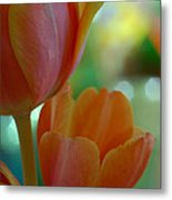 Nothing As Sweet As Your Tulips Metal Print by Donna Blackhall