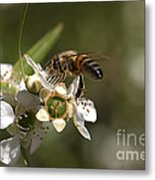 Nourishment Metal Print by Joy Watson