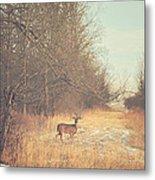 November Deer Metal Print