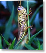 Now I Can See You Better Metal Print