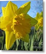 Now That's A Daffodil Metal Print