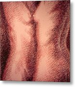 Nude Female Torso Drawings 1 Metal Print