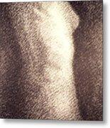 Nude Female Torso Drawings 4 Metal Print