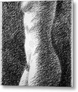 Nude Female Torso Drawings 6 Metal Print