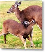 Nurturing Nature Metal Print