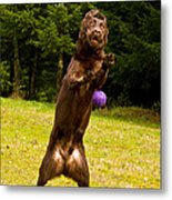 Nute And The Ball Metal Print