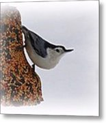 Nuthatch Bell Metal Print