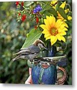 Nuthatch Bird Having Tea Metal Print