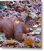 Nuts About Nuts Metal Print
