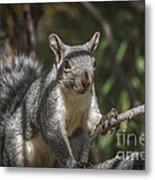 Nuts Please Metal Print