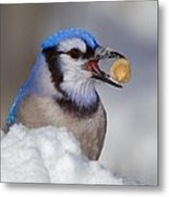 Nuts To This Winter Metal Print