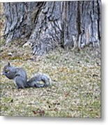 Nutty Metal Print