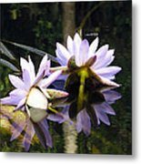 Nymphaea Colorata. Water Lilies Metal Print