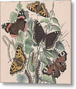 Nymphalidae Metal Print