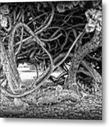 Oahu Ground Vines - Hawaii Metal Print by Daniel Hagerman