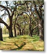 Oak Allee At Roseland Plantation  Metal Print