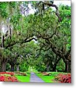 Oak Allee Brookgreen  Metal Print