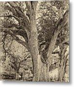 Oak Alley Backyard Seoia Metal Print