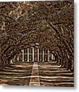 Oak Alley Bw Metal Print by Steve Harrington