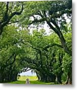 Oak Alley Trees Metal Print