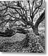 Oak And Ivy Bw Metal Print