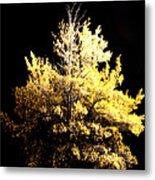 Oak At Night Metal Print