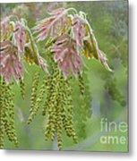 Oak Blossoms Metal Print