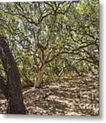 Oak Forest - The Magical And Mysterious Trees Of The Los Osos Oak Reserve Metal Print