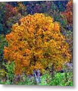 Oak In Autumn Color Metal Print