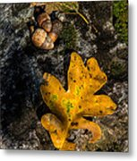 Oak Leaf And Acorn In Autumn Metal Print