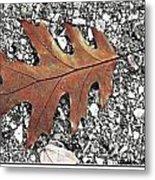 Oak Leaf On Asphalt  Metal Print
