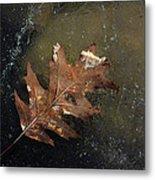 Oak Leaf On Ice Metal Print