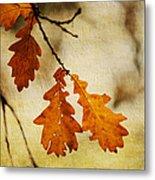 Oak Leaves At Autumn Metal Print
