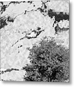 Oak On A Hill Blk And Wht Metal Print