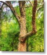 Oak On The Etowah Metal Print