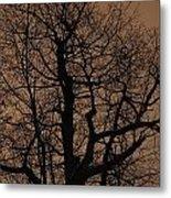 Oak Silhouette  Metal Print
