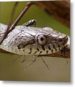 Oak Snake And Fly Metal Print