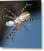 Oak Spider With Prey Metal Print