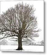 Oak Tree And Farm House Metal Print
