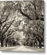 Oak Trees Of Charleston South Carolina In Sepia Metal Print